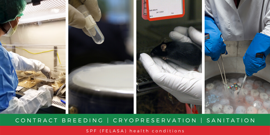 Let's reconsider your research – InnoSer contract breeding services