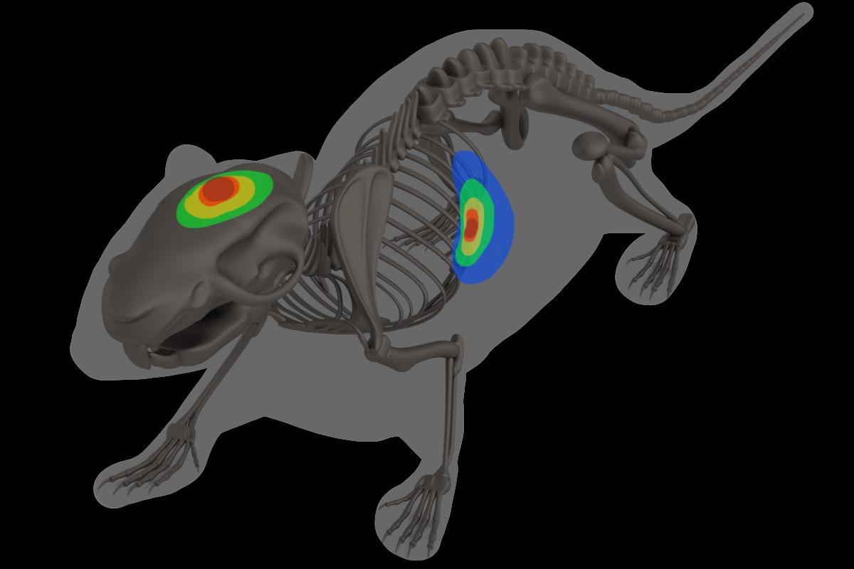 mouse-imaging-dark