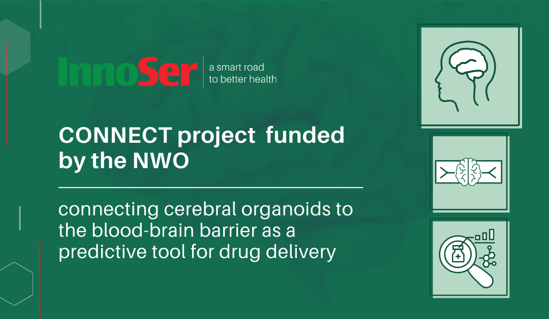 CONNECT: Connecting Cerebral Organoids to the Blood-Brain Barrier